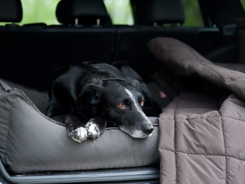 Orthopädisches Hundebett Sealand