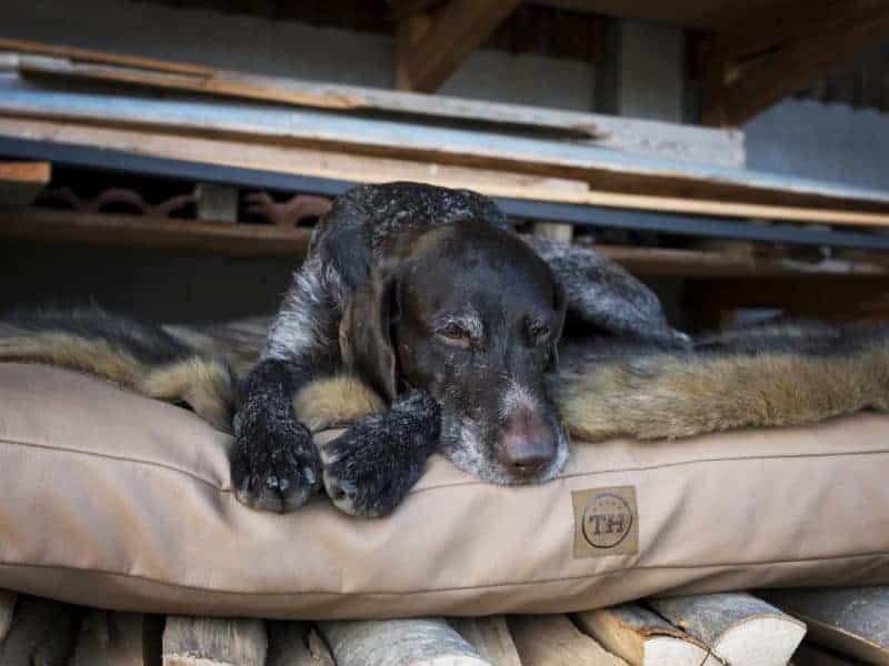 Orthopädisches Hundekissen Jagdlich Leder