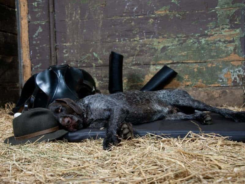 Orthopädische Hundematte Jagdlich Leder