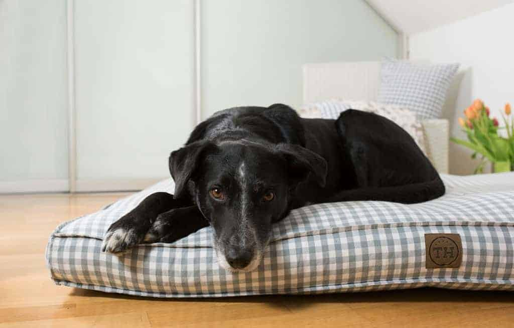 Hundekissen Organic Karo grau-weiß