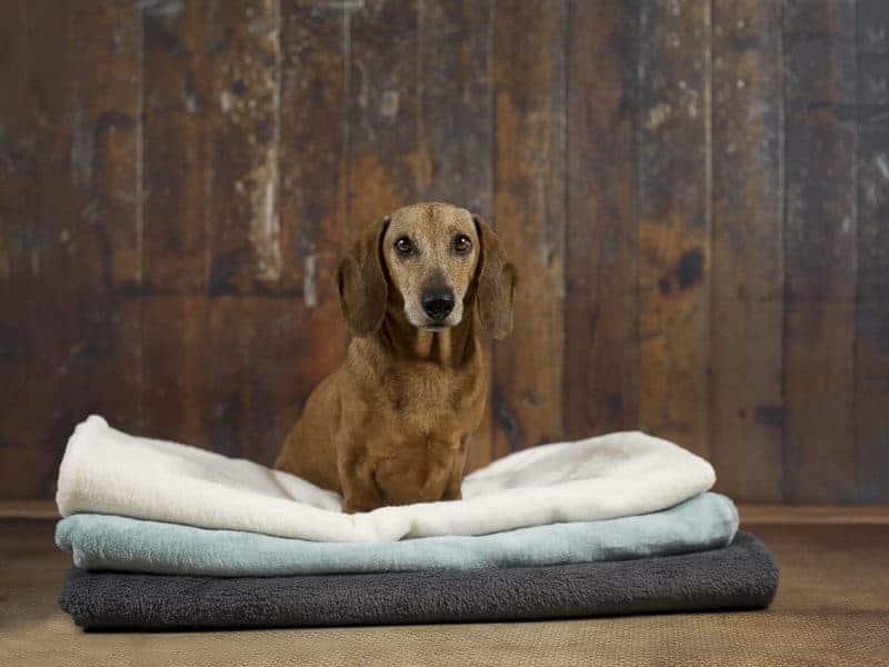 Hundedecke Protect von Traumhund