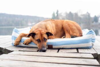 Orthopädisches Hundebtt Sylt Hellblau