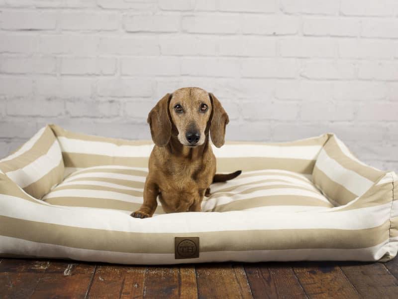Orthopädisches Hundebett Sylt