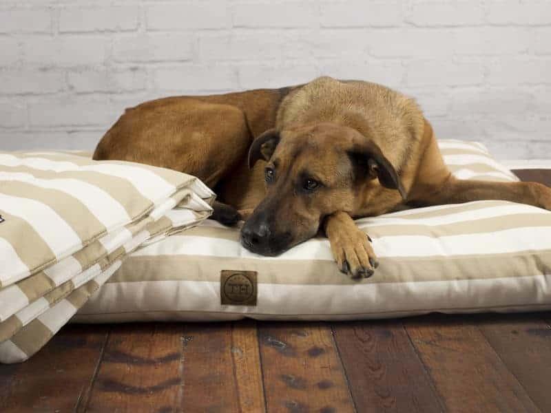 Orthopädisches Hundekissen Sylt