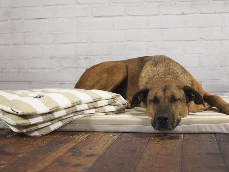 Orthopädische Hundematte Sylt