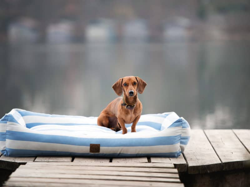 Orthopädisches Hundebett Sylt Hellblau