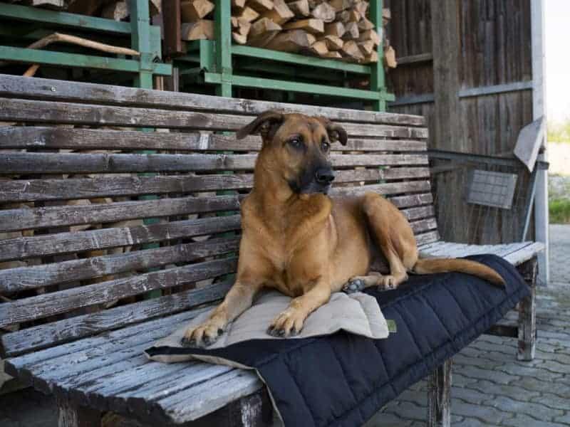 Hundedecke Organic 95 von Traumhund®️