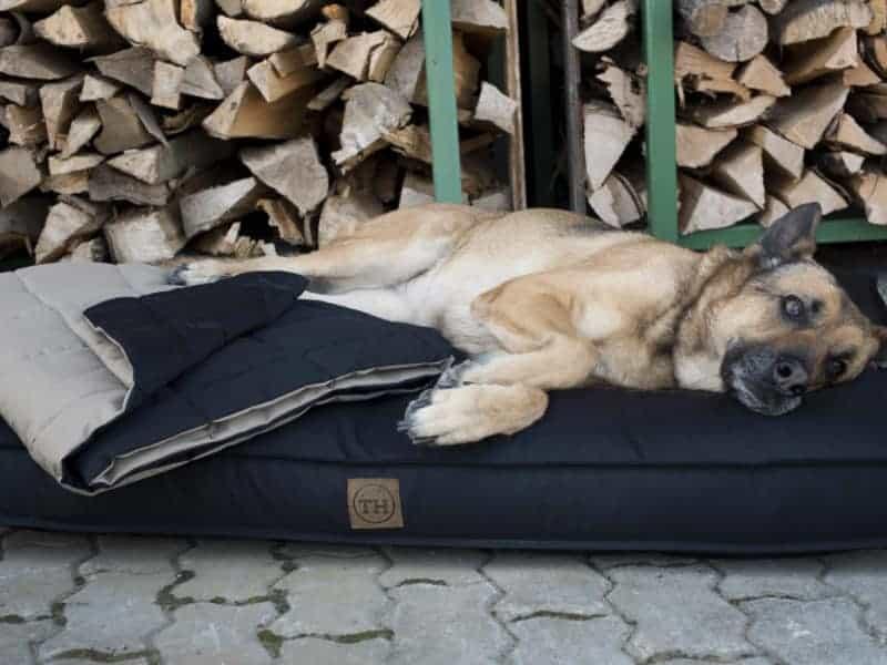 Orthopädisches Hundekissen Organic 95