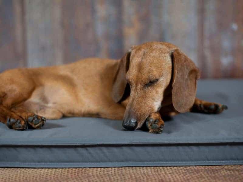 Orthopädische Hundematte Organic 95