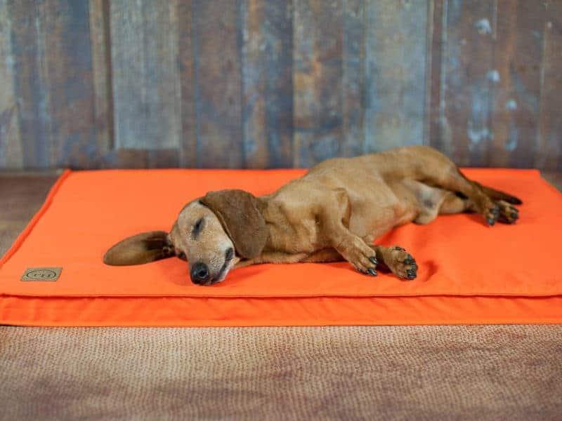 Bezug Organic 95 für Hundematten Neon Orange