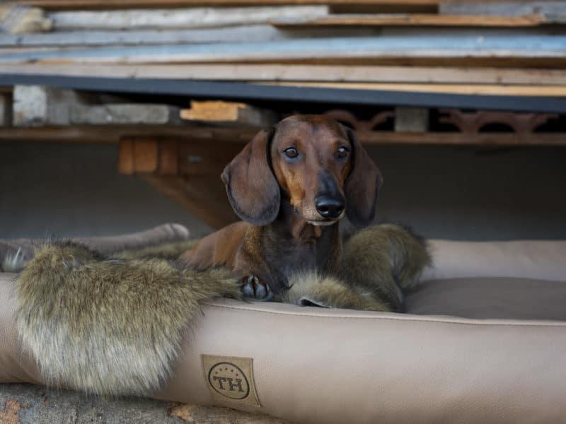 Orthopädisches Hundebett Jagdlich Leder von Traumhund®️