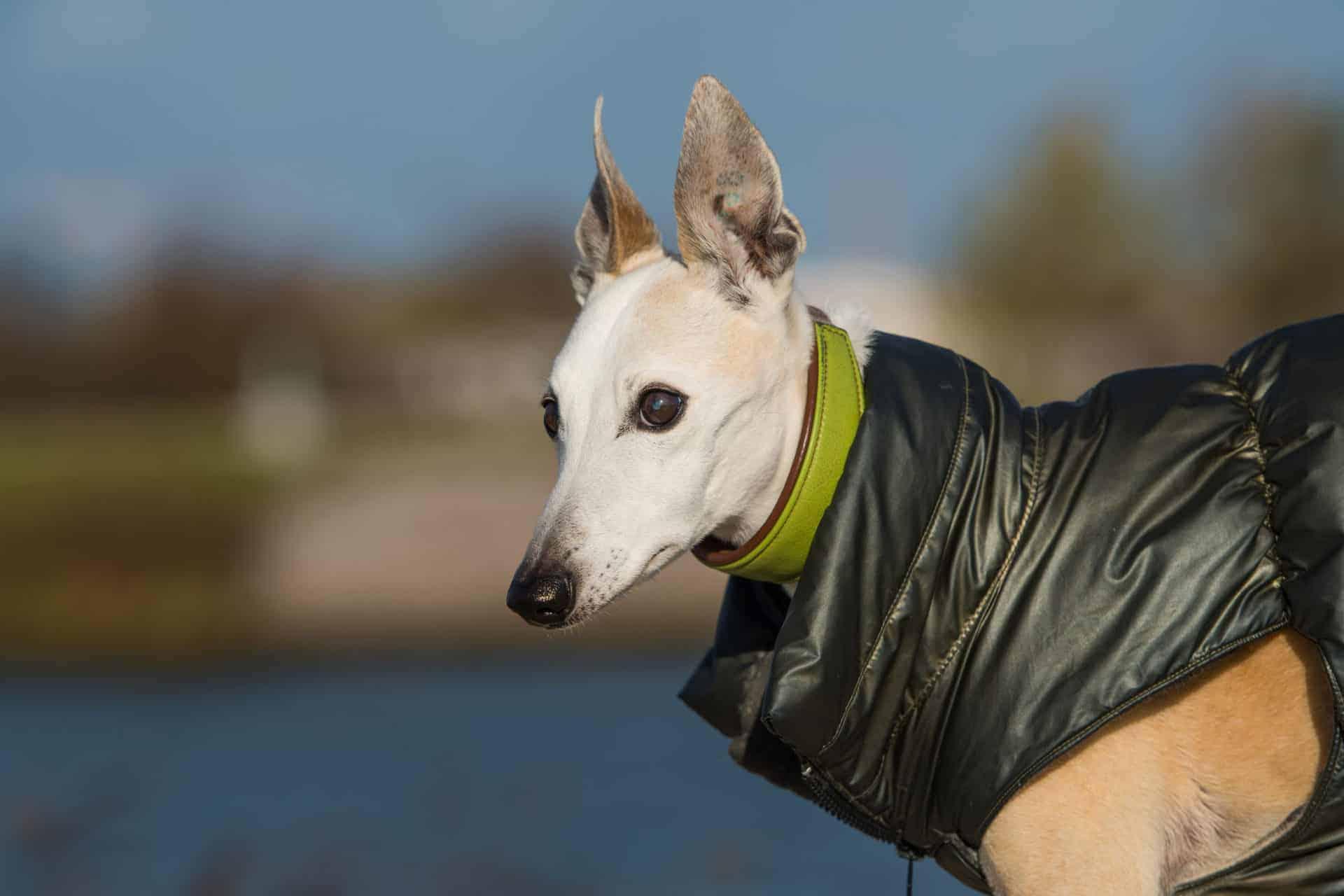 Spondylose Beim Hund: Hilft Ein Orthopädisches Hundebett?