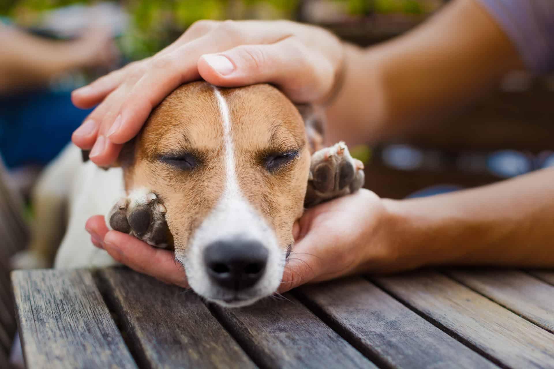 spondylose beim hund hilft ein orthop disches hundebett. Black Bedroom Furniture Sets. Home Design Ideas
