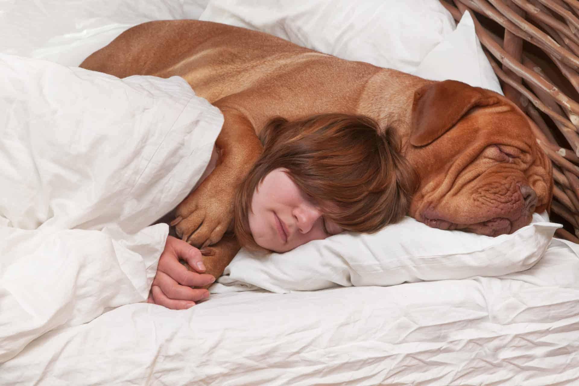 Mädchen schläft mit Hund im Bett - Kontaktliegen