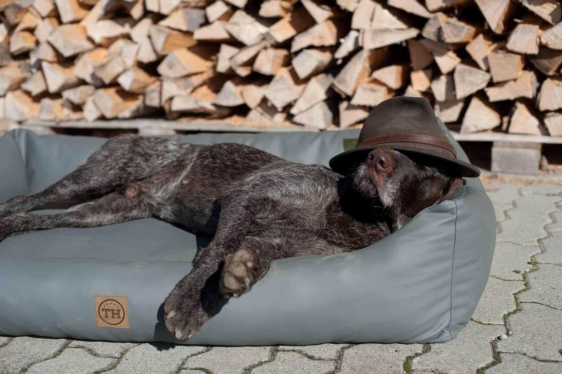 Hundebett Jagdlich Leder Graugans