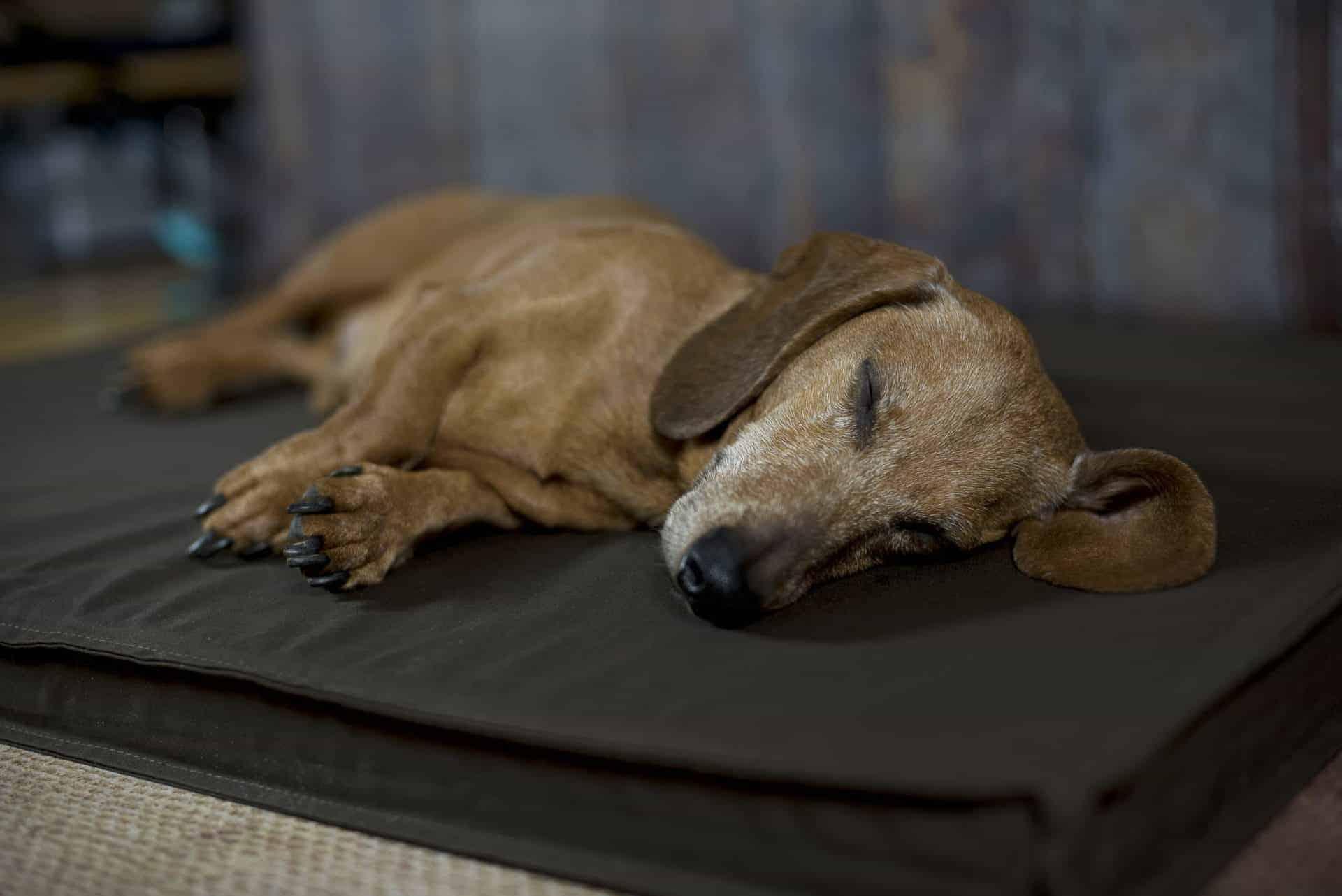 Orthopädische Hundematten für Bodenschläfer