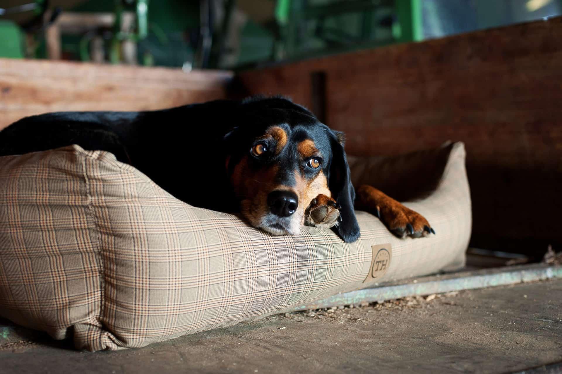Orthopädisches Hundebett aus purem Visco Schaum