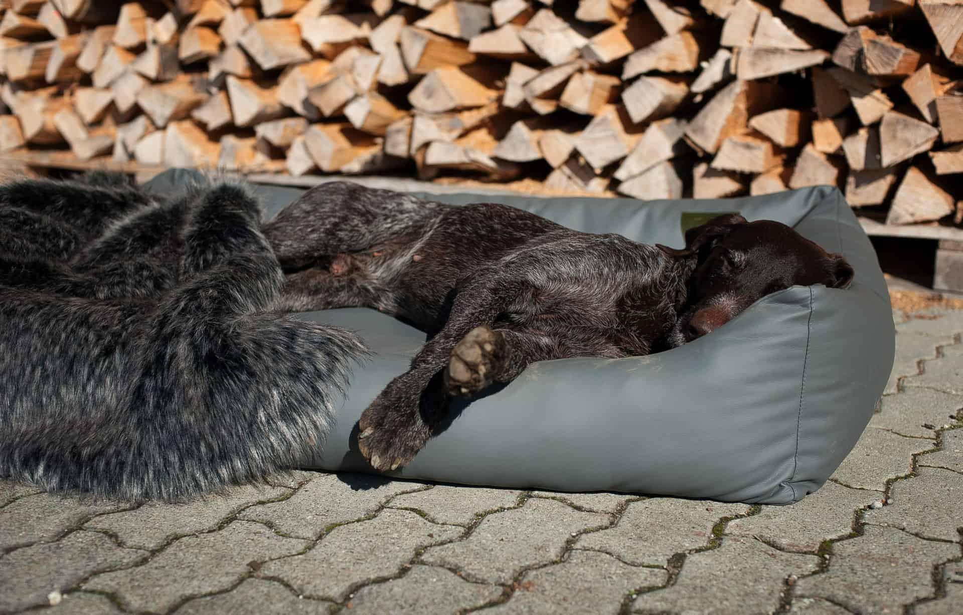 Orthopädisches Hundebett mit druckentlastender Wirkung
