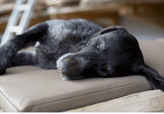 Orthopädische Hundematte Kunstleder von Traumhund