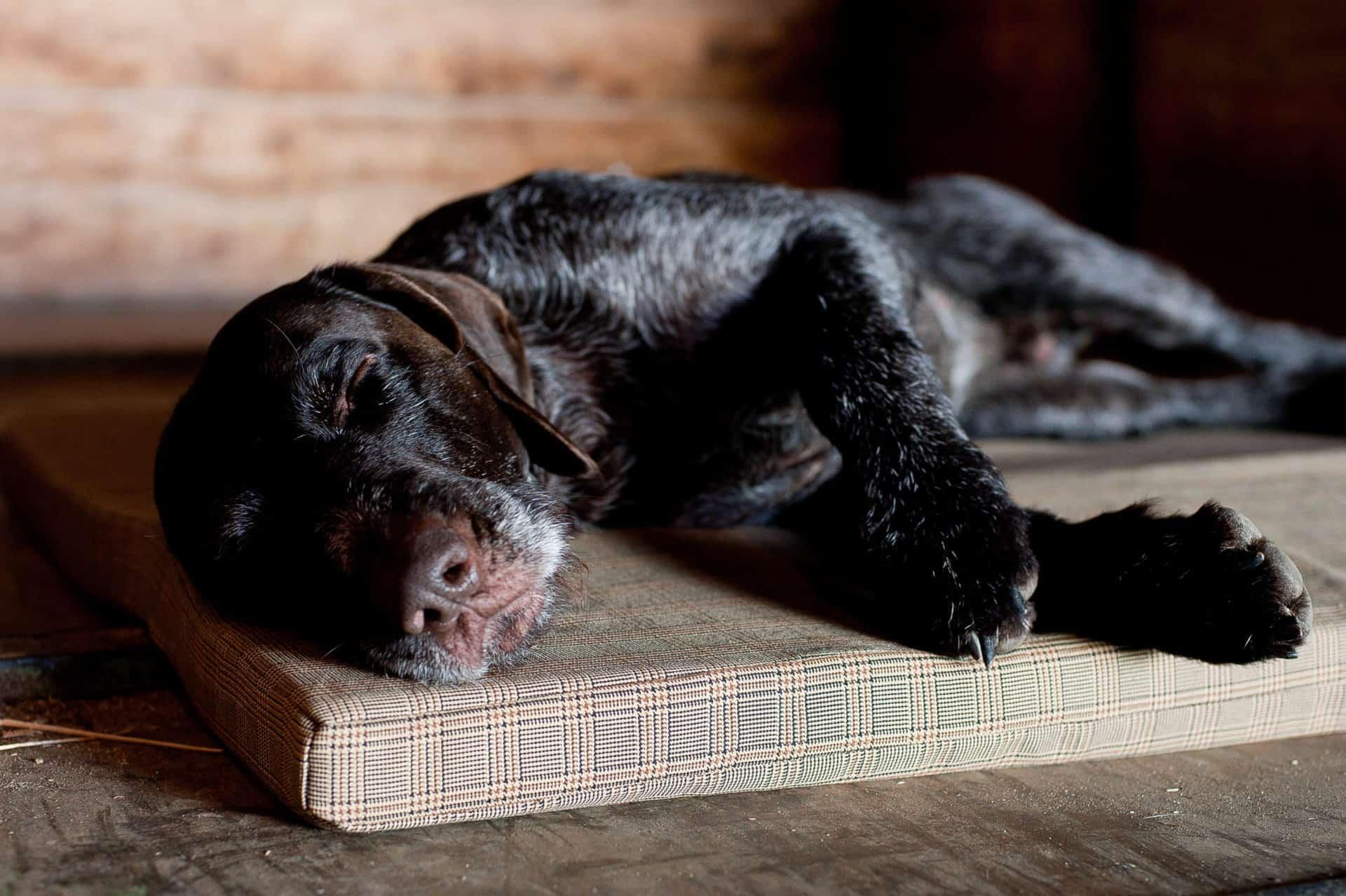 Orthopädische Hundematte aus Visco Schaum