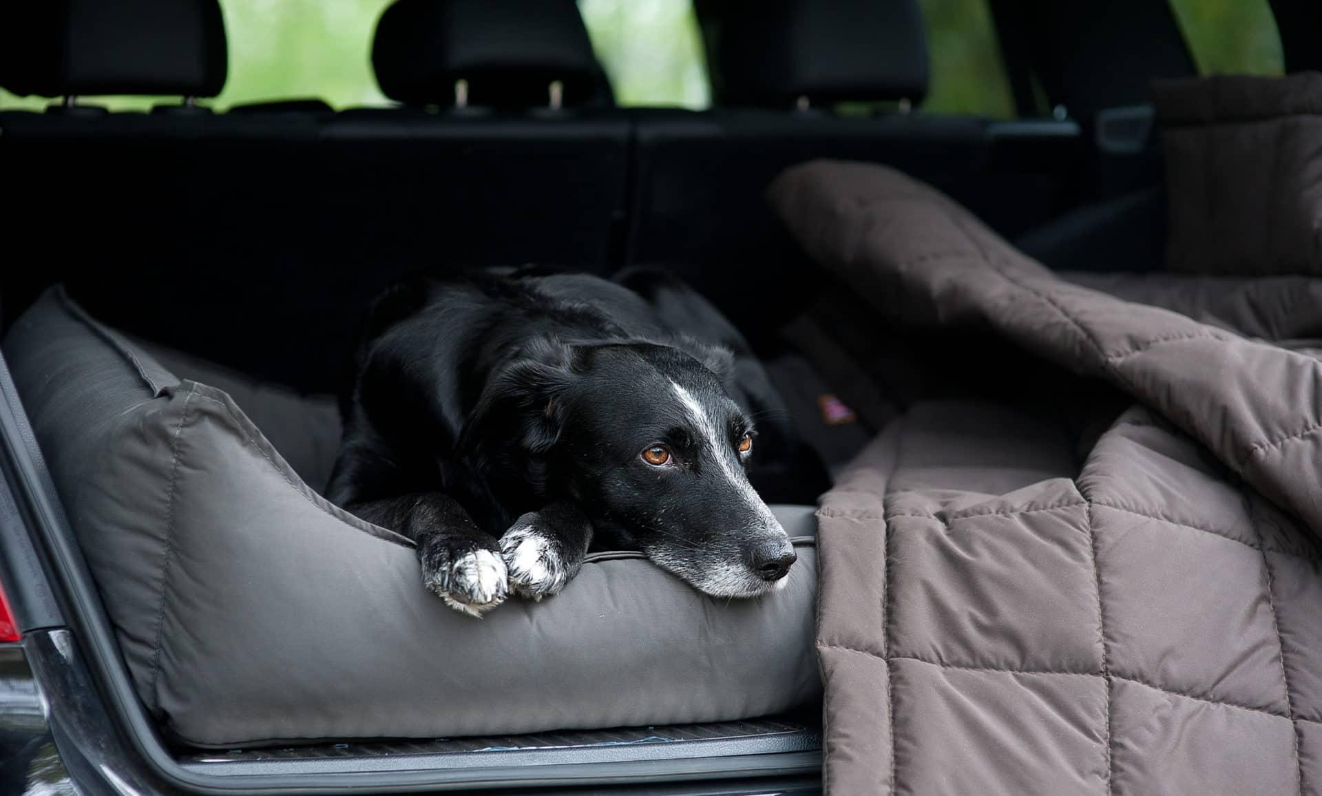 Hundebetten für alte Hunde