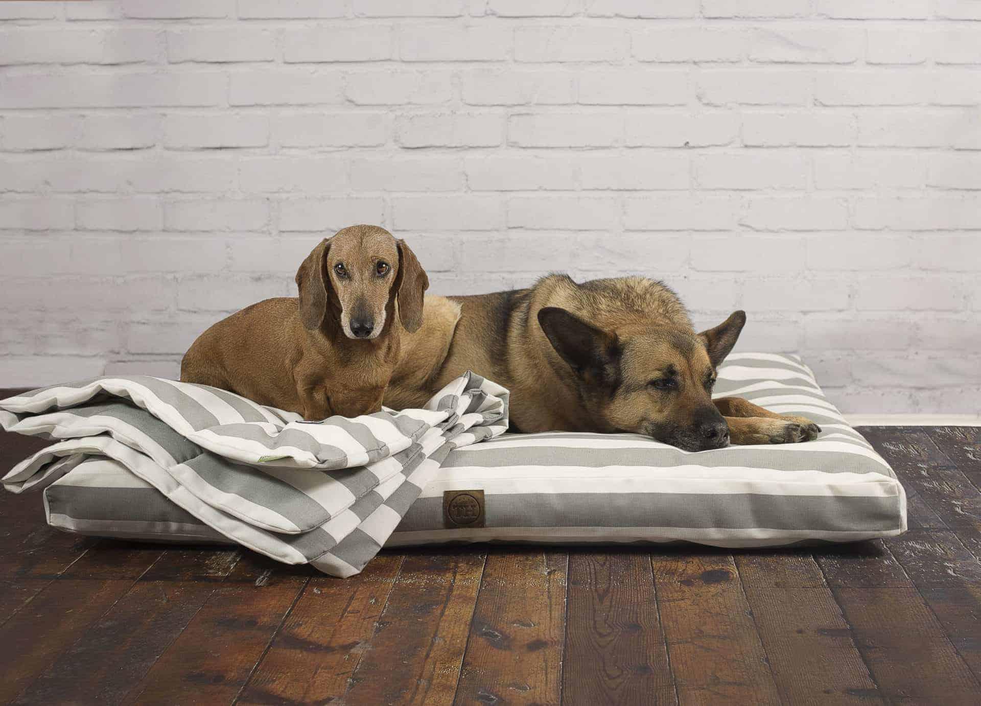 Visco Schaum für allergische Hunde