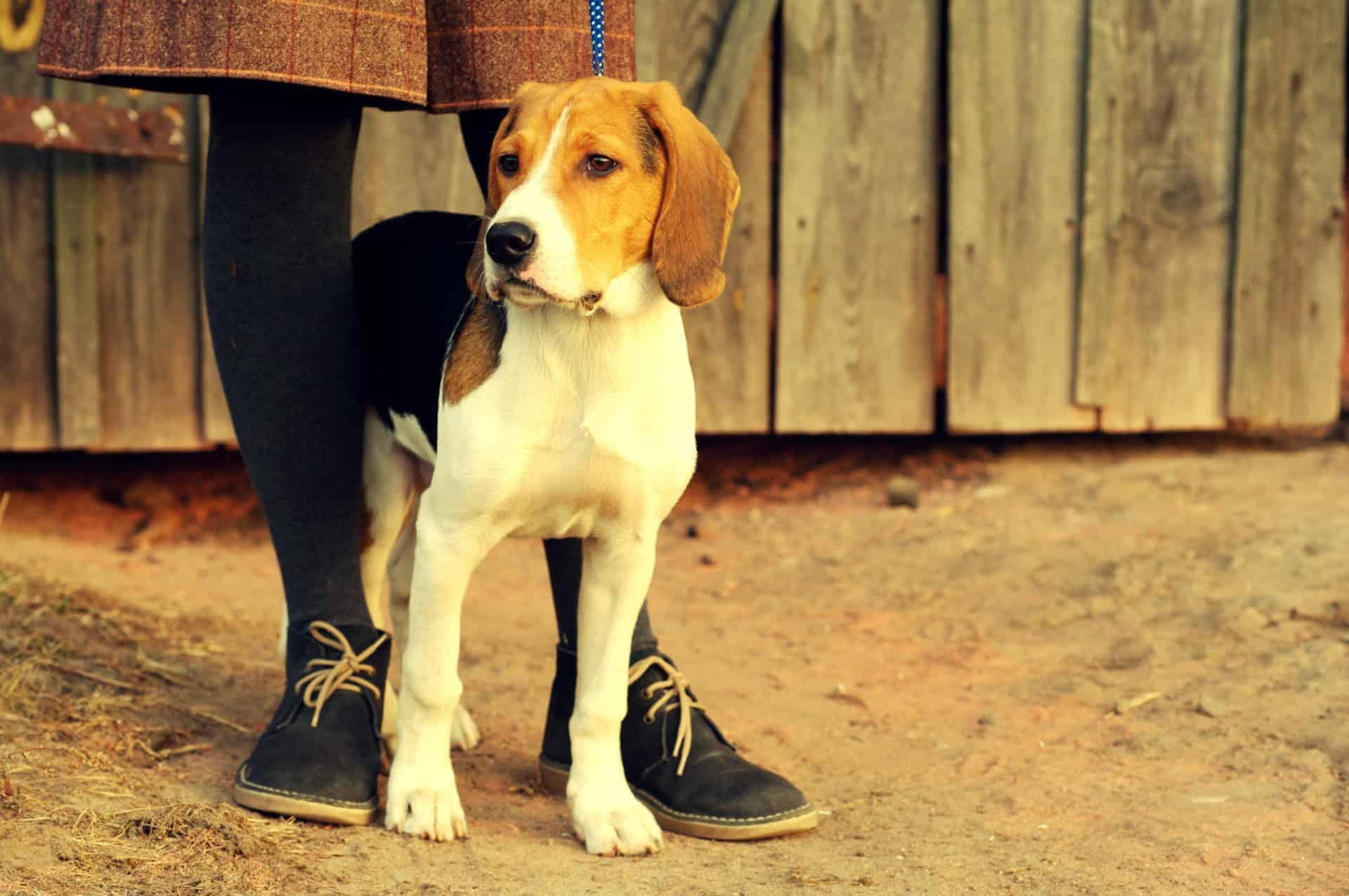 Hunde haben ein ausgeprägtes Ruhebedürfnis