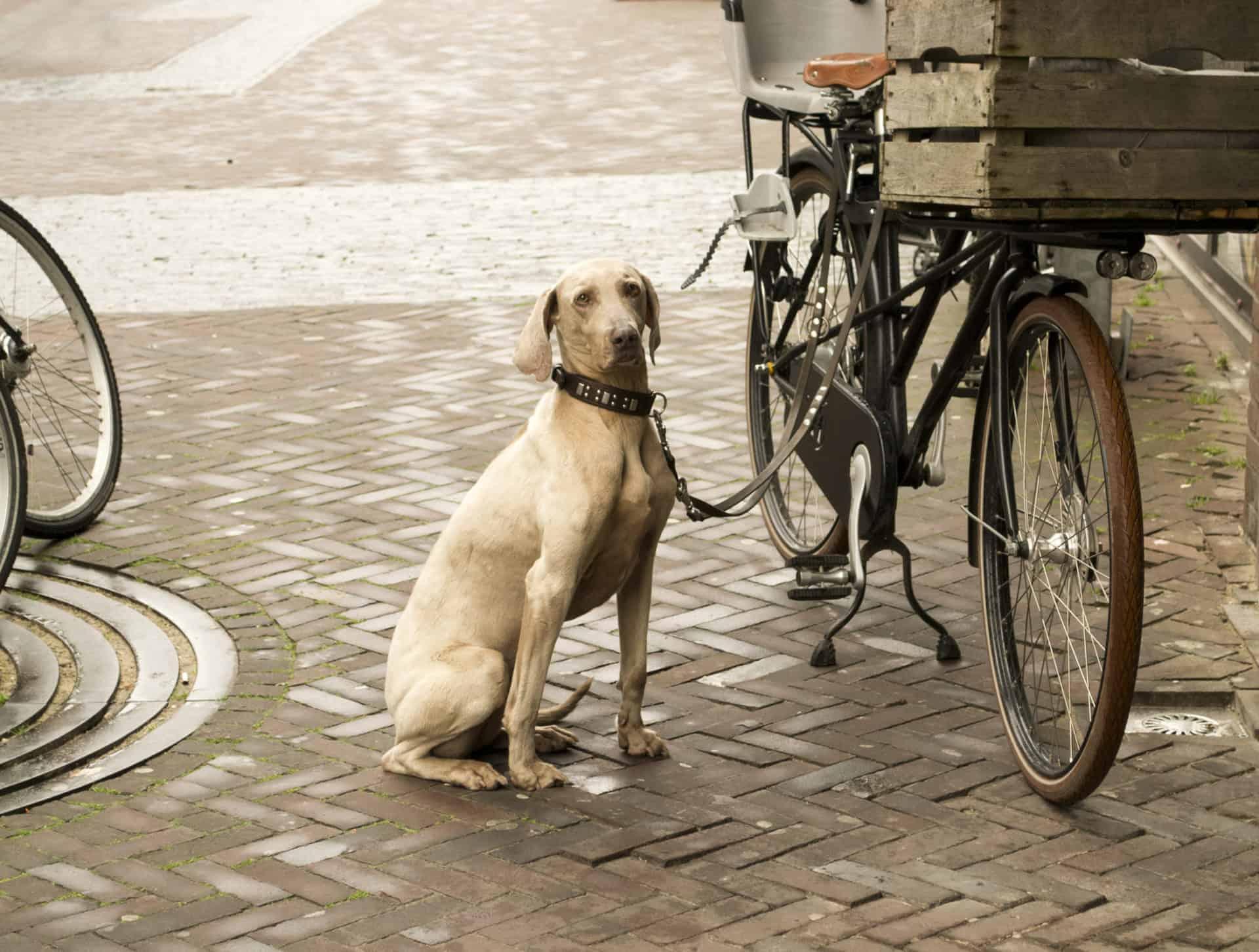 Lieferzeit für Hundebetten nach Maß