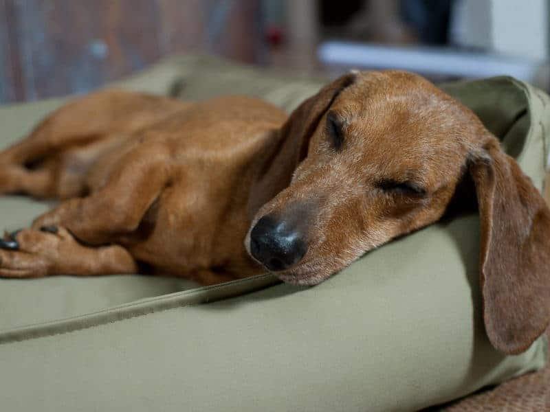 Orthopädisches Hundebett Organic 95 Schilf
