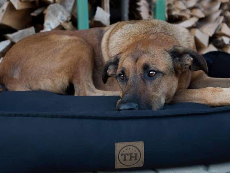 Orthopädisches Hundebett Organic 95 Schwarz