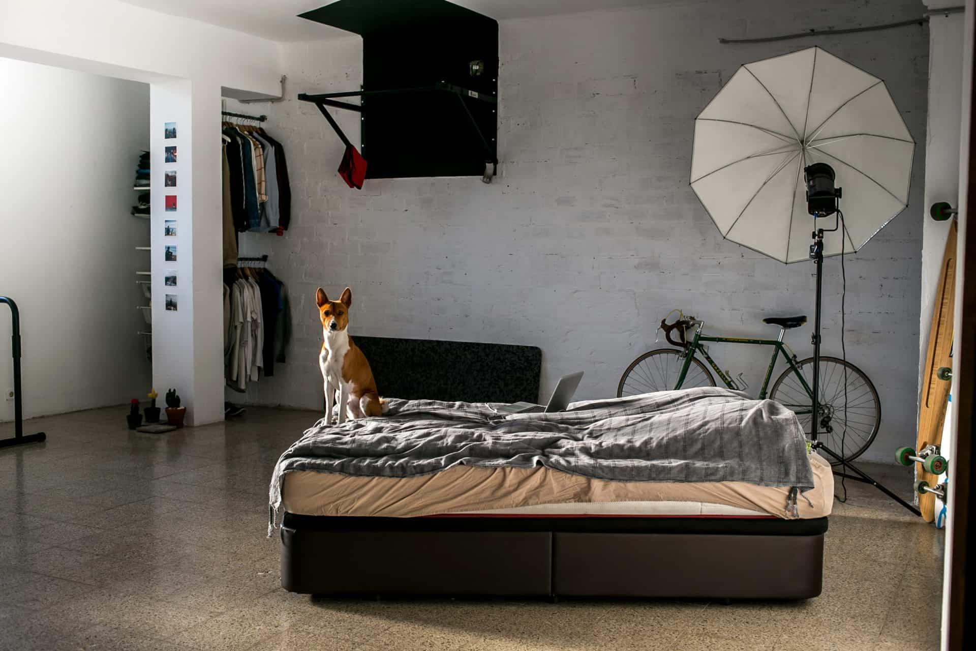 Luxus-Hundebetten von Traumhund