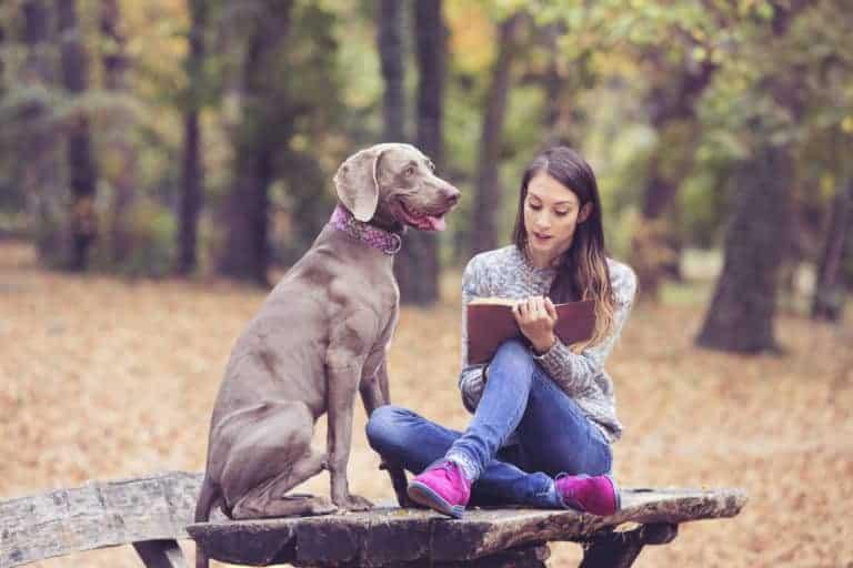 hundebetten für große hunde bis gr xxl von traumhund®