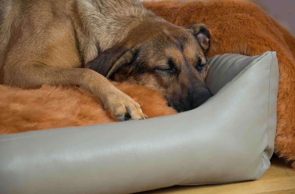 Orthopädische Hundebetten für Nestbauer
