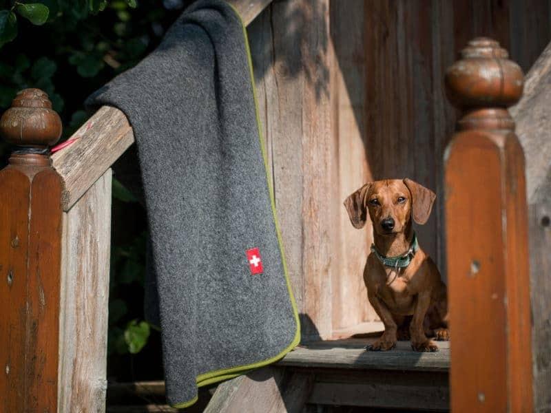 Almdeckerl Loden von Traumhund
