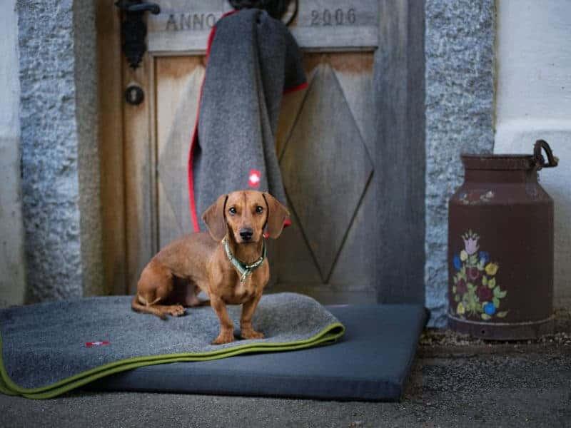 Almdeckerl Loden mit Hundematte Wallis