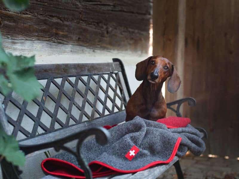 Almdeckerl Loden: Hundedecke mit natürlicher Thermofunktion