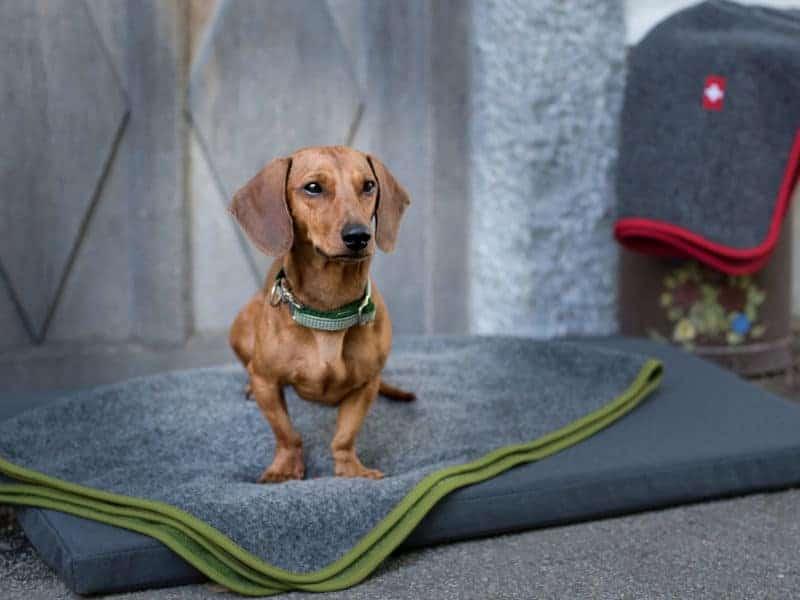 Orthopädische Hundematte Wallis mit Almdeckerl Loden