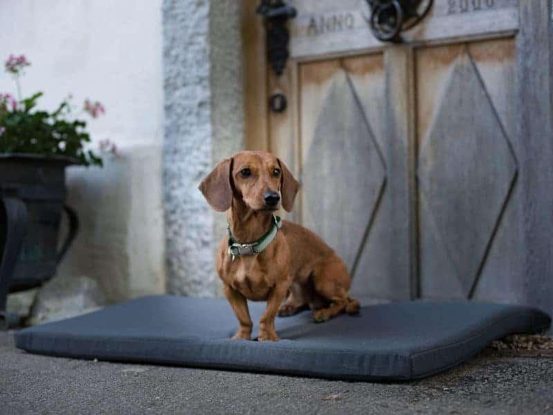 Orthopädische Hundematte Wallis aus Visco Schaum