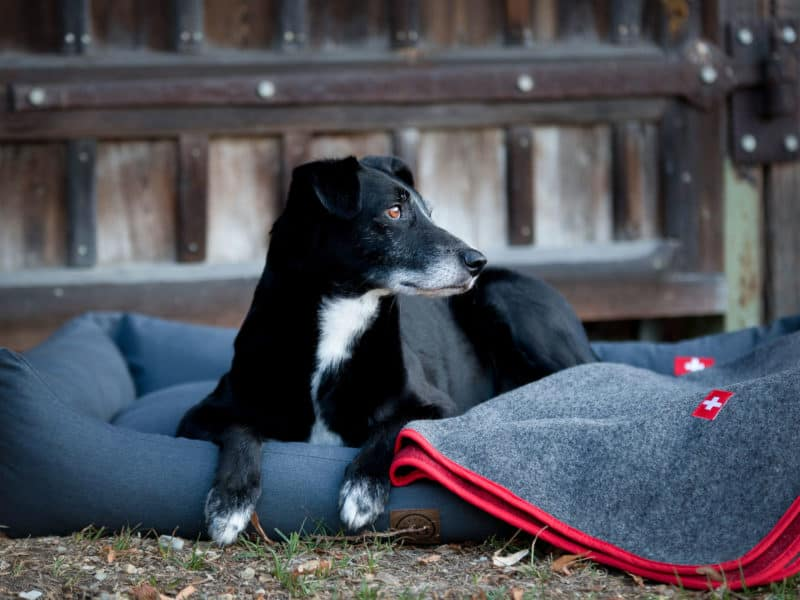 Orthopädisches Hundebett Wallis mit Almdeckerl Loden