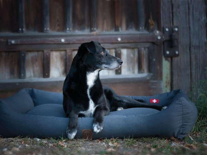 Orthopädisches Hundebett Wallis mit Schweizer Flagge