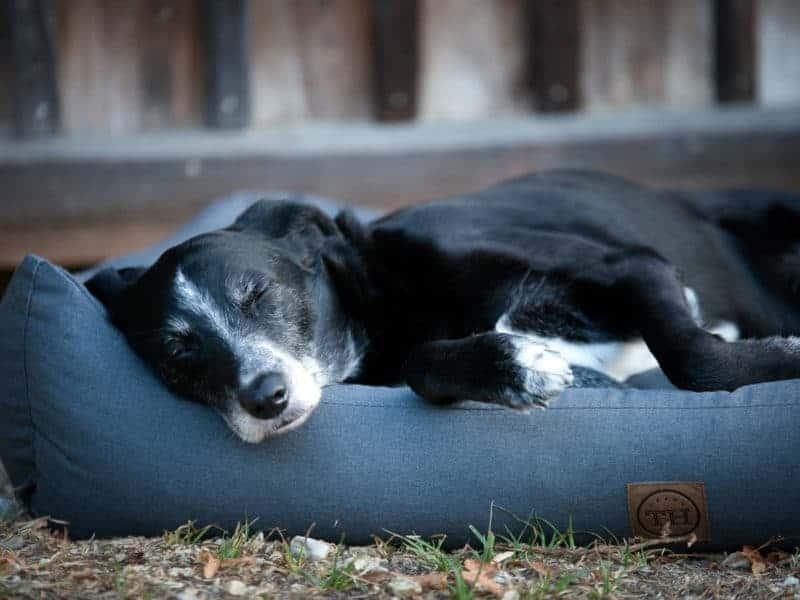 Orthopädisches Hundebett Wallis von Traumhund