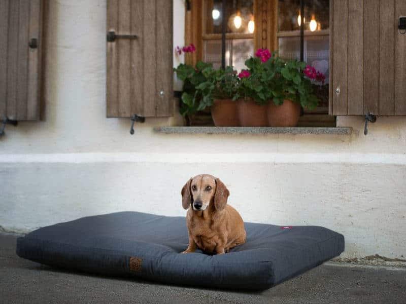 Orthopädisches Hundekissen Wallis aus Schurwolle