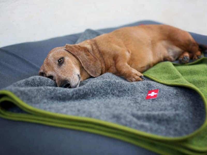 Orthopädisches Hundekissen Wallis mit Almdeckerl Grau-Grün