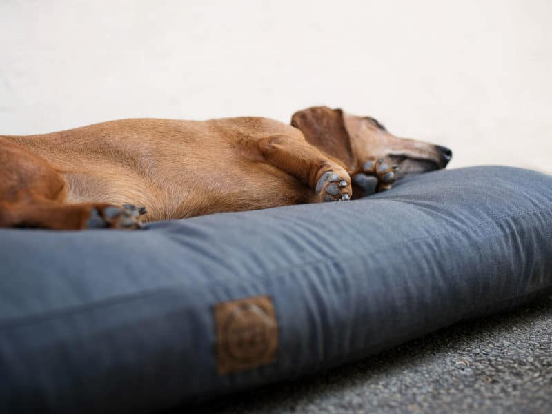 Orthopädisches Hundekissen Wallis von Traumhund
