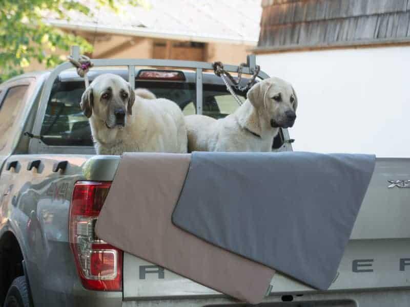 Hundedecke Thermo im Auto