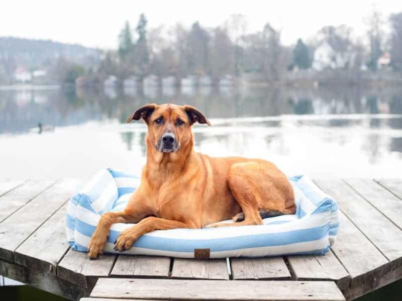 Bezug Orthopädiches Hundebett Sylt Hellblau/Weiß
