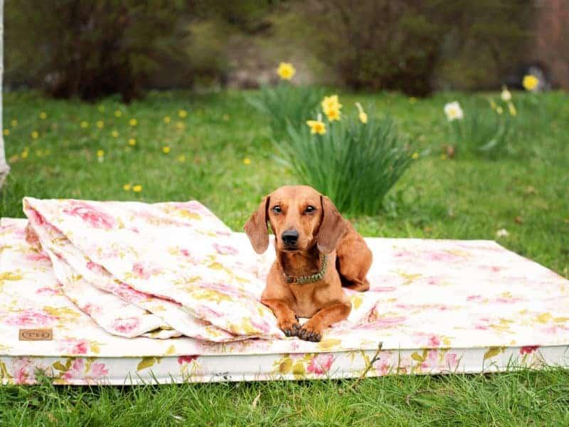 Bezug Rosenstolz für Hundematten