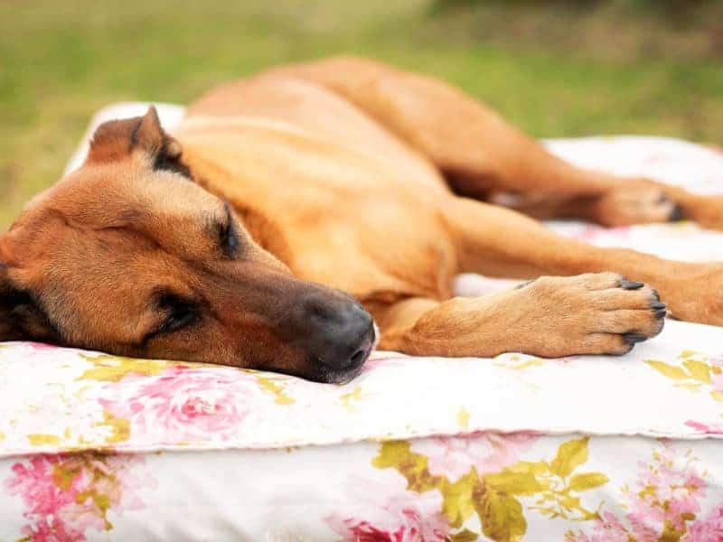 Orthopädisches Hundekissen Rosenstolz