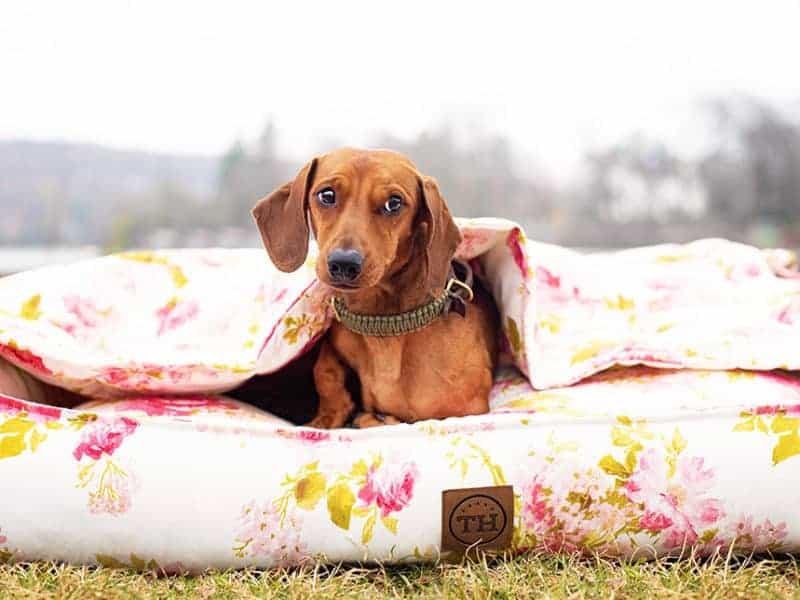 Hundedecke Rosenstolz