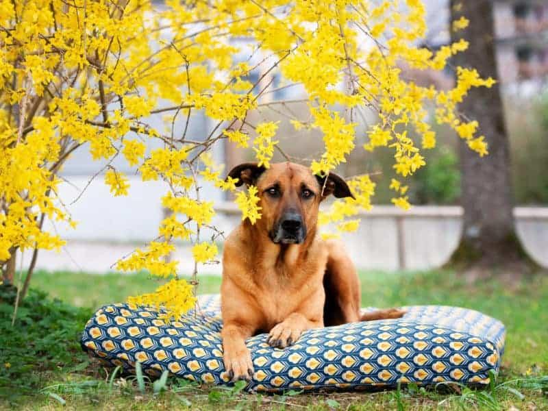 Bezug Sealand für Hundekissen Retro